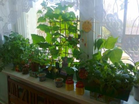 Garden on the windowsill
